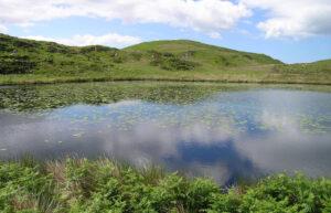 Bearded Lake