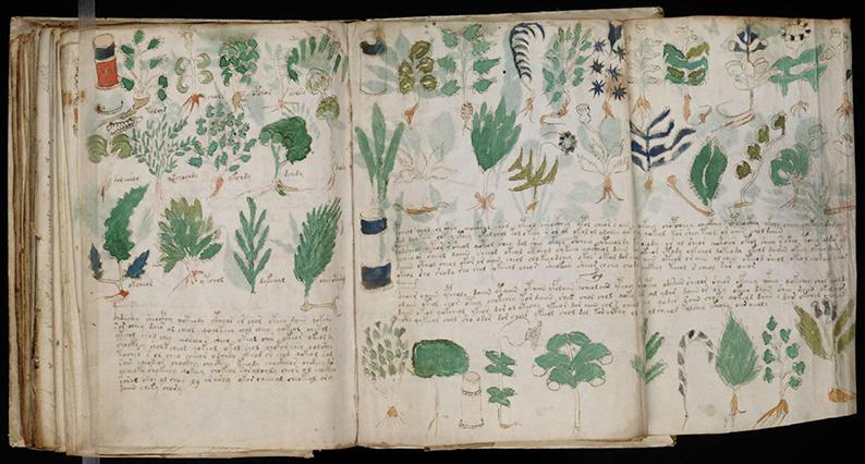 Codice Voynich