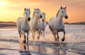 Cavallo pic