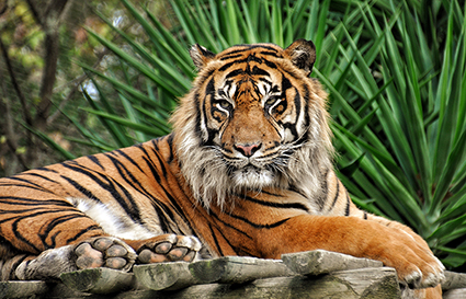 Tigre pic