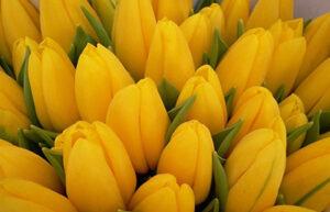 giallo significato simbologia pic