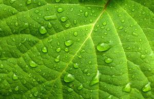 verde proprietà e significato pic