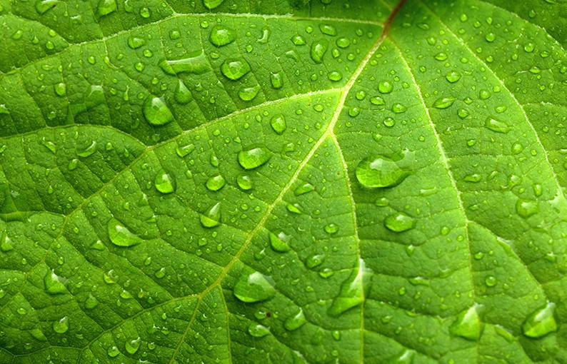 verde proprietà e significato