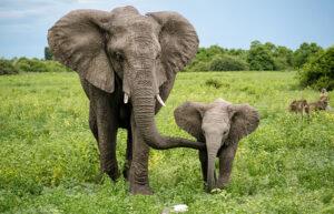 Significato e simbologia dell'Elefante