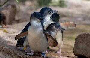 Significato e simbologia del Pinguino